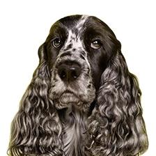 Sauberer Hund – zuhause und unterwegs