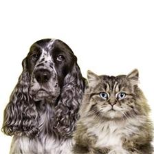So stehen Hunde- und Katzenbesitzer sauber da